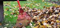 raking leaves for The Stanislaus Sprout Blog