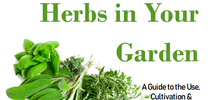 Herbs in your garden cover for The Stanislaus Sprout Blog