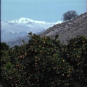 citrus and mountains
