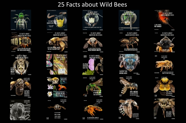 bee facts poster