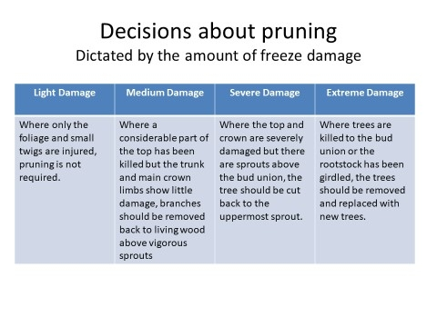 pruning decisions frost