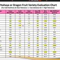 dragon-fruit-recommendations chart