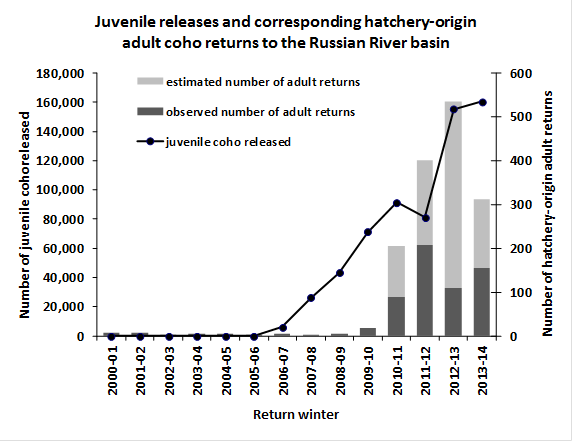Juvenile releases and corresponding hatchery-origin adult coho returns to the Russian River basin