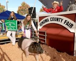 SCF Jr Livestock Auction
