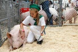 Showing Swine at SCF