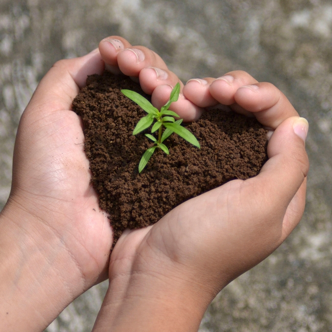 seedling-growing-in-hands-heart-shape-soil