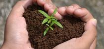 seedling-growing-in-hands-heart-shape-soil for UCCE Sonoma Blog