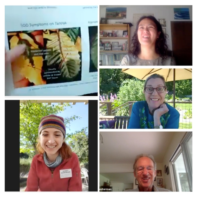 SOD Program Coordinator Kerry Wininger, SOD Specialist Master Gardeners Janet Calhoon and Alan Chesterman, SSU Center for Environmental Inquiry Naturalist Eri Sawairi, met virtually with SOD Blitz participants via 3 Zoom Q&A sessions on May 2 & 3, 2020