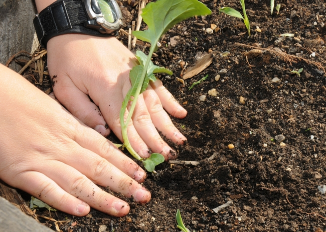 The UC Master Gardener Program can provide technical assistance to help home gardeners find resources for home soil testing. Photo: USDA