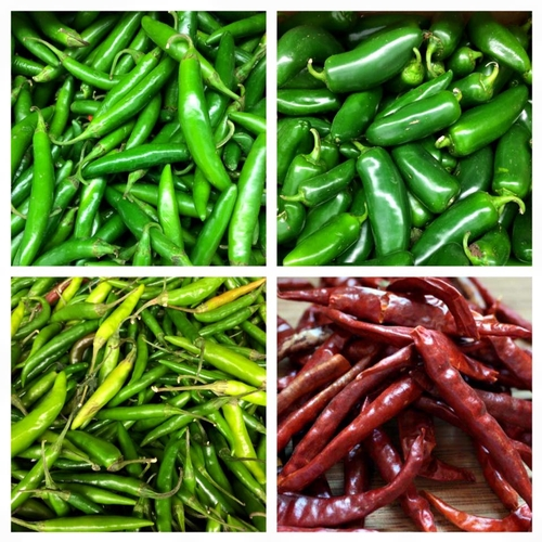 Top row right to left: Chili serrano, Jalapenos.  Bottom row right to left: Thai peppers, dried abrol peppers.