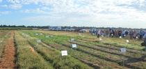 weed day 2014 for UC Weed Science Blog