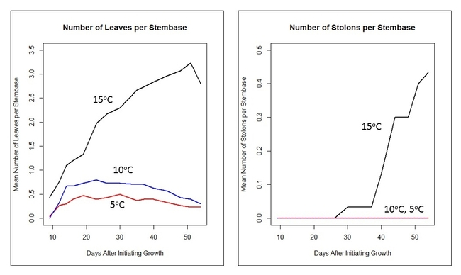 Figure 3. Comparison of waterhyacinth leaf and stolon growth by water temperature.