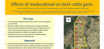 Effects of Medusahead on Beef Cattle Gains for UC Weed Science Blog