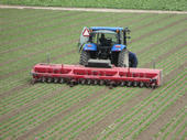 Steketee IC cultivating three 80-inch wide beds