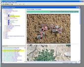 Broadleaf Weeds of California - software