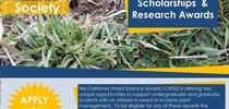 CWSS Student Scholarship Flyer for UC Weed Science Blog