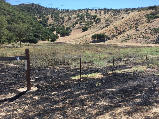 Field after burn. Yellow starthistle and summer mustard are still green.