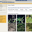 Repository home page. Users can search by by mode of action, herbicide chemistry, herbicide, plant, or damage symptoms.