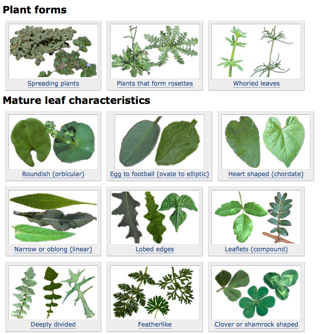 Figure 2. Plant characteristics page.