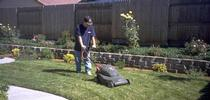Mowing lawn using electric mulching mower. (C.A. Reynolds) for Pests in the Urban Landscape Blog