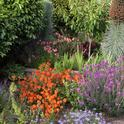 Mixed planting of woody and herbaceous perennials. (Credit: Petr Kosina, UCIPM)