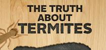 Termite Awarness Week Infographic for Pests in the Urban Landscape Blog