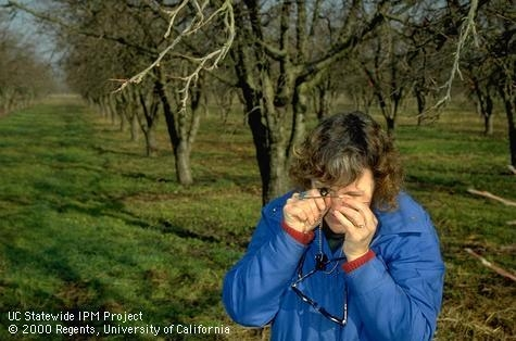 IPM Advisor Carolyn Pickel, first woman Cooperative Extension advisor, worked to solve orchard pest issues for 38 years. (Credit: Jack Kelly Clark)