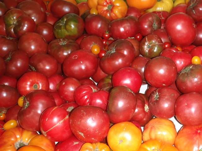Tomatoes. (photo by Betty Homer)