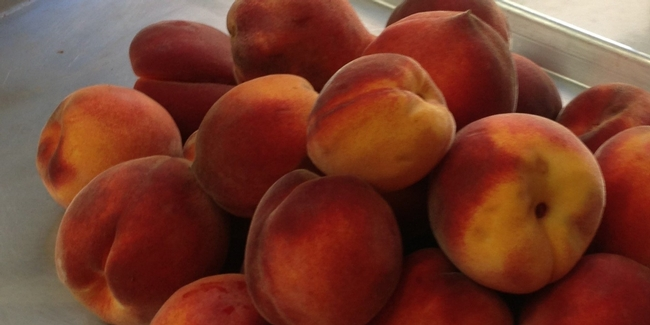 Fresh peaches off the tree. (photos by Christine Macgenn)