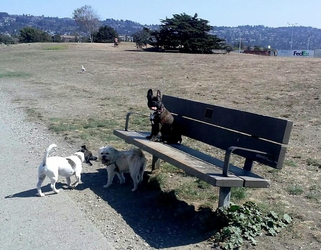 Even the pups are avoiding the brown grass!  Point Isabel Dog Park, Richmond.