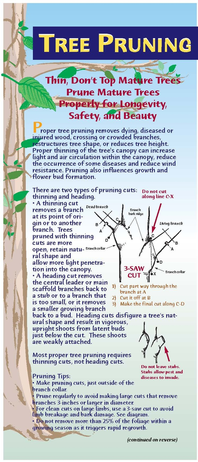tree pruning Page 1