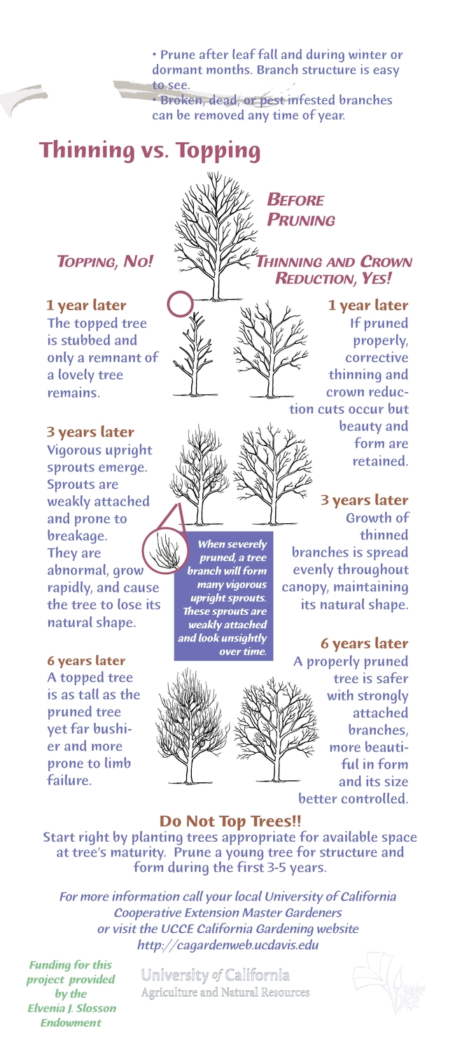 tree pruning Page 2