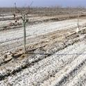 Toxins on the soil surface can look like snow.