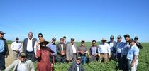 Farmer Jesse Sanchez hosted an agricultural tour from Afghanistan at Sano Farms last year as part of his involvement with UC ANR's Conservation Agriculture Systems Innovation Center. for ANR News Blog Blog