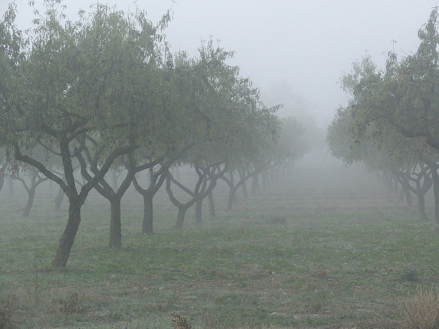 Foggy weather helps keep the daytime temperatures down, which helps trees accumulate chill hours.