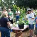 UCCE Master Gardeners of Santa Clara County conduct sustainable gardening and hands-on workshops for the public.