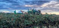 A stormy vineyard captured by California Winegrape Growers on Twitter, @CAWG_GROWERS. for ANR News Blog Blog