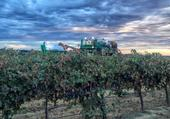 A stormy vineyard captured by California Winegrape Growers on Twitter, @CAWG_GROWERS.