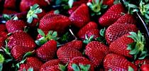 Berries are soft fruit, so robotic harvesting is unlikely. The industry is looking to agtech to reduce the amount of labor needed and make it easier for farmworkers to pick and harvest the fields. (Photo: Pixabay) for ANR News Blog Blog