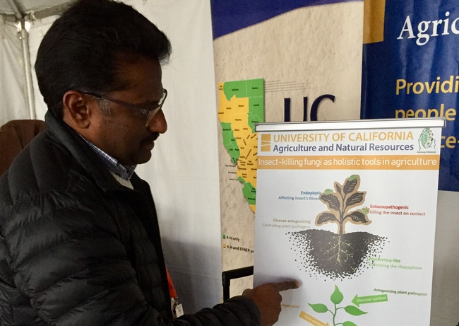 Surendra Dara, UC Cooperative Extension advisor, explores innovative options to control pests using microbials as biological controls.