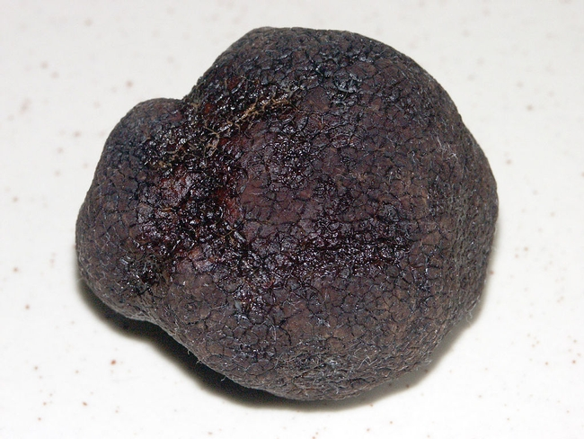 Perigord black truffles potential new crop for California. (Photo: Wikimedia Commons)