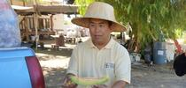 Michael Yang is a longtime agricultural assistant for UC Cooperative Extension. for ANR News Blog Blog