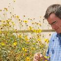 UC Davis pollination ecologist Neal Williams is one of the featured speakers at an international symposium. (Photo by Kathy Keatley Garvey)
