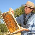 Bee breeder-geneticist Susan Cobey at the Harry H. Laidlaw Jr. Honey Bee Research Facility, UC Davis. (Photo by Kathy Keatley Garvey)