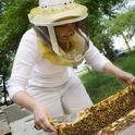 Maryann Frazier inspects a hive. (Photo courtesy of Penn State)