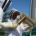 Rooftop beekeeping on the San Francisco Chronicle roof. (Photo by Kathy Keatley Garvey)
