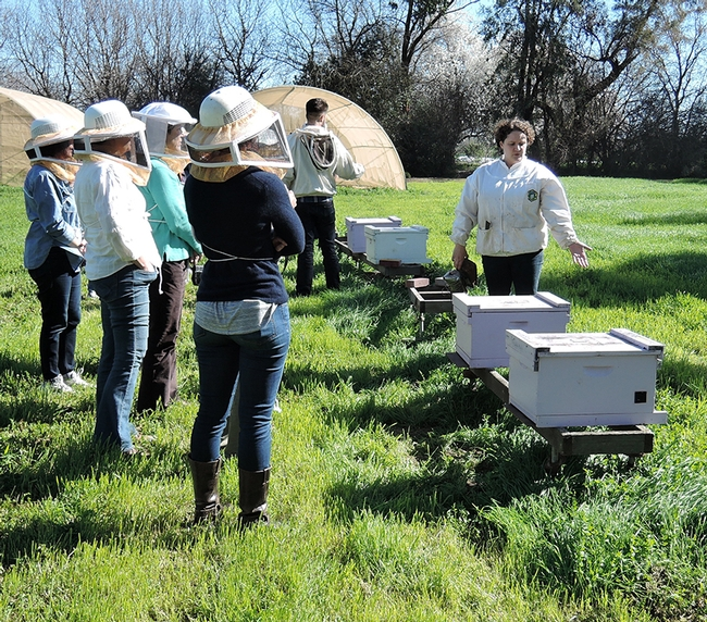 Extension apiculturist Elina Niño of UC Davis greets a beekeeping class before donning a veil and smoking the hive. (Photo by Kathy Keatley Garvey)