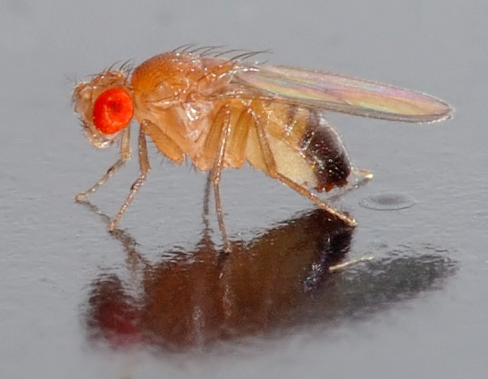 UC Berkeley biologist Ciera Martinez studies fruit flies but she will be speaking on