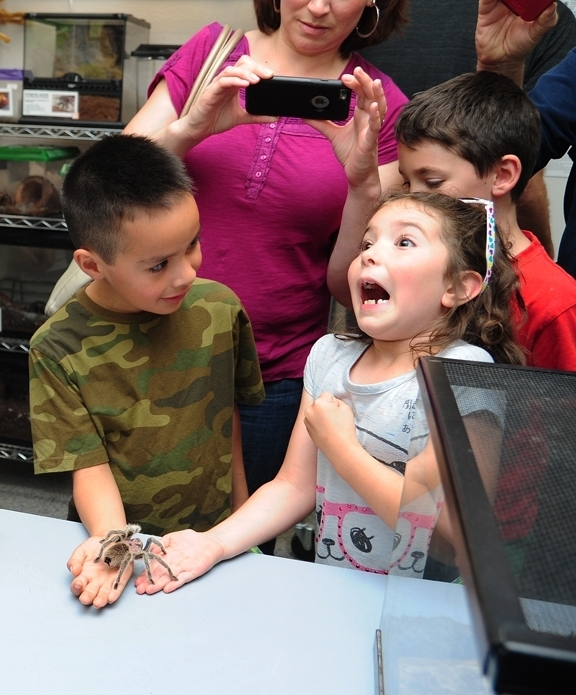 It tickles! Joel Fuerte, 6, of Woodland, and Roxanne Bell, 7, of Davis, reacting to a rose-haired tarantula named Peaches at the 2015 TODS event. (Photo by Kathy Keatley Garvey)