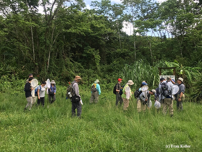 The Bohart Museum crew participates on its first hike in Belize, led by Dave Wyatt and Fran Keller. (Photo by Fran Keller)